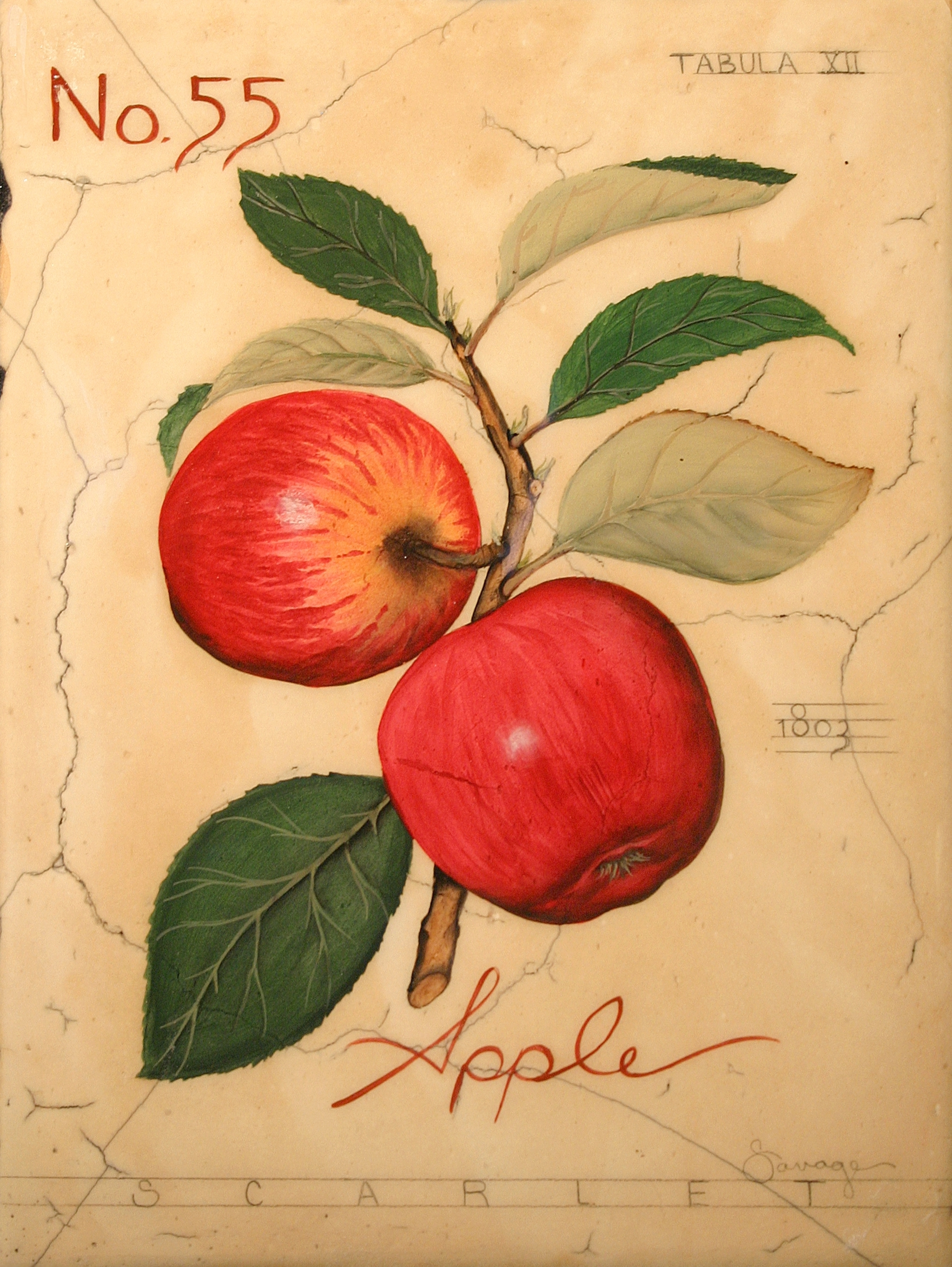 No. 55 Red Apple