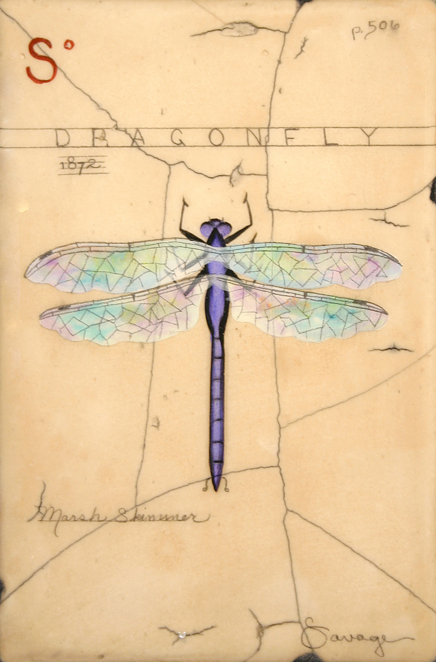 S. Purple Dragonfly