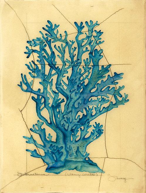 Stony Coral Fresco