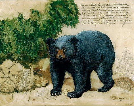 American Black Bear Fresco