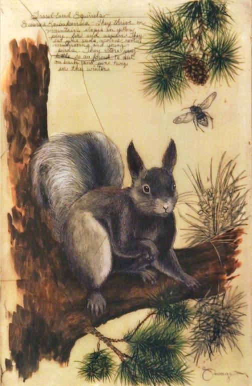 Tassel-eared Squirrel _Fresco 11x17
