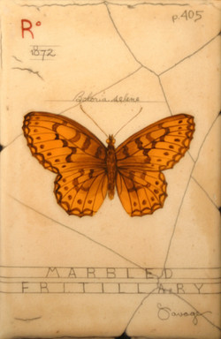 R. Marbled Fritillary Butterfly