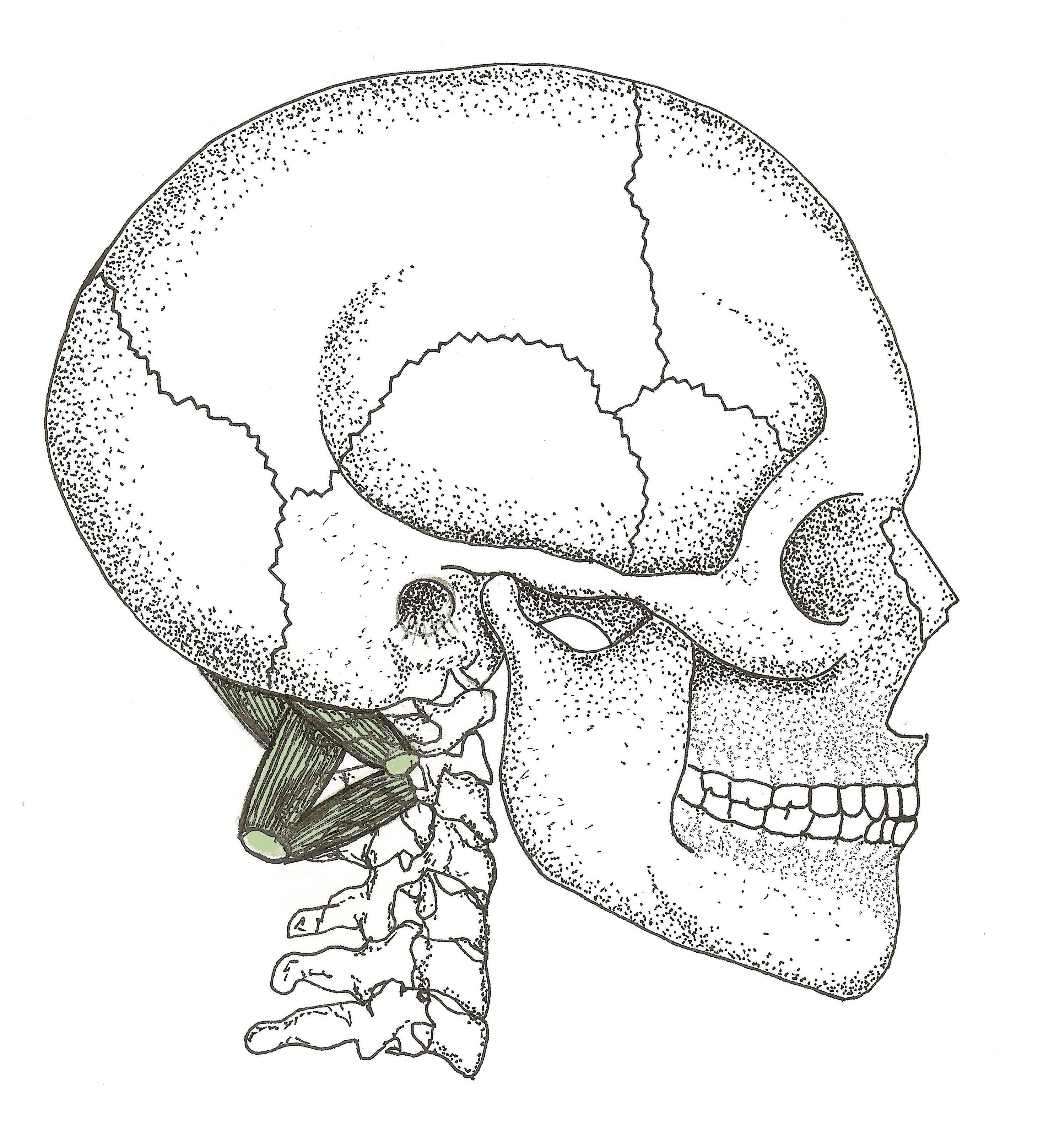 TrP Level II Suboccipitals _F