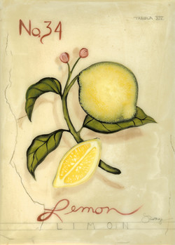 No. 34 Lemon