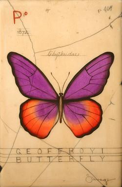 P. Geoffroyi Butterfly