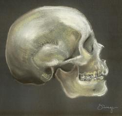 Human Skull pastel