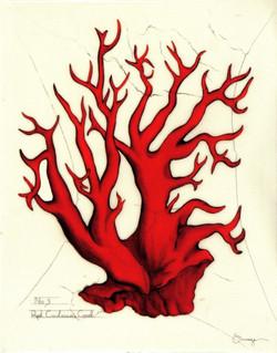 Red Cnidaria Coral