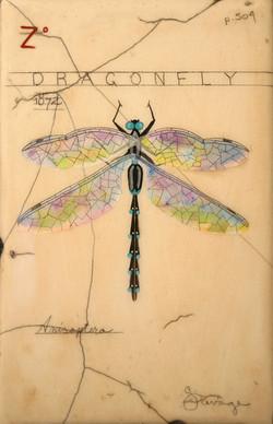 Z. Blue Dragonfly