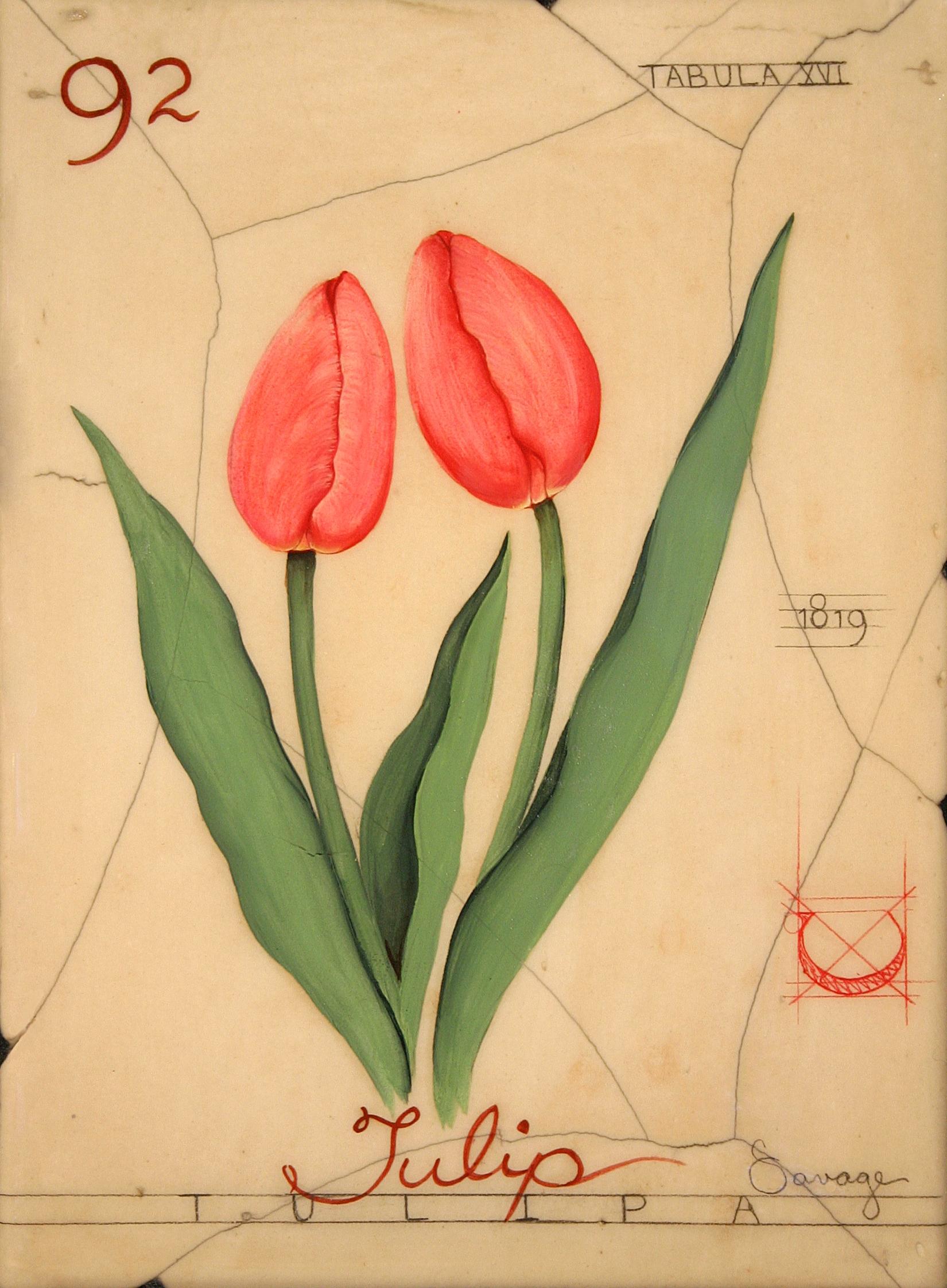 No. 92 Tulip