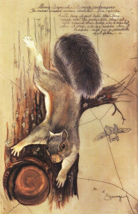 Gray Squirrel Fresco