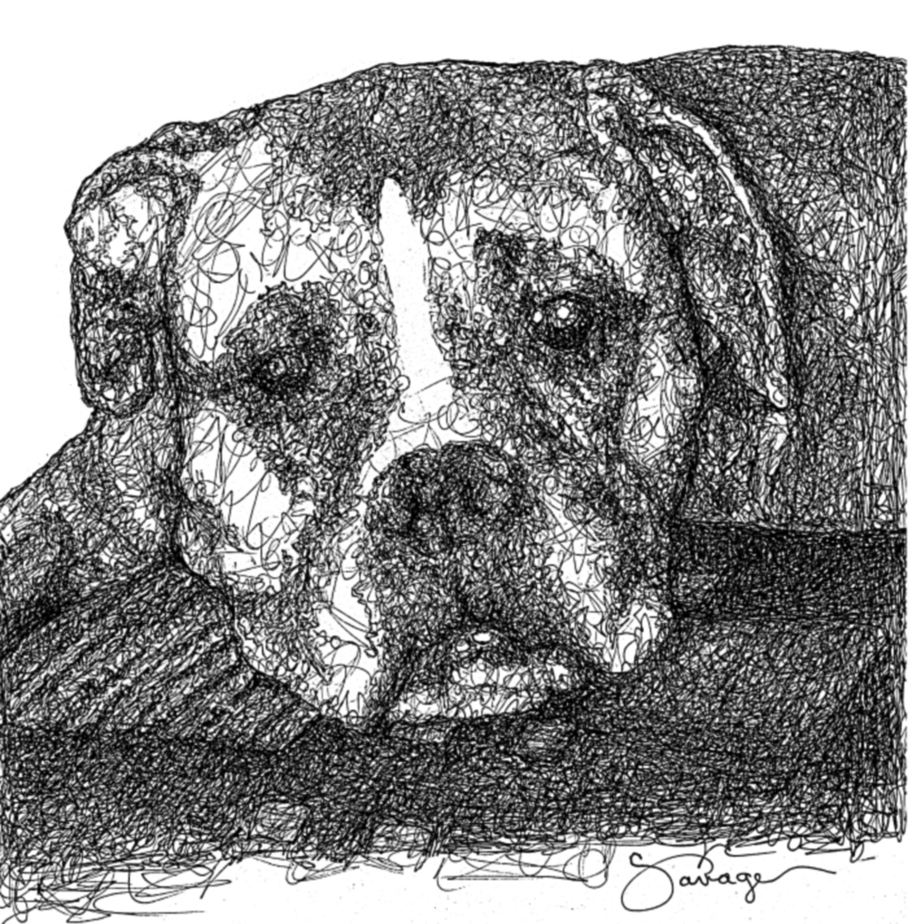 Baxter, Boxer