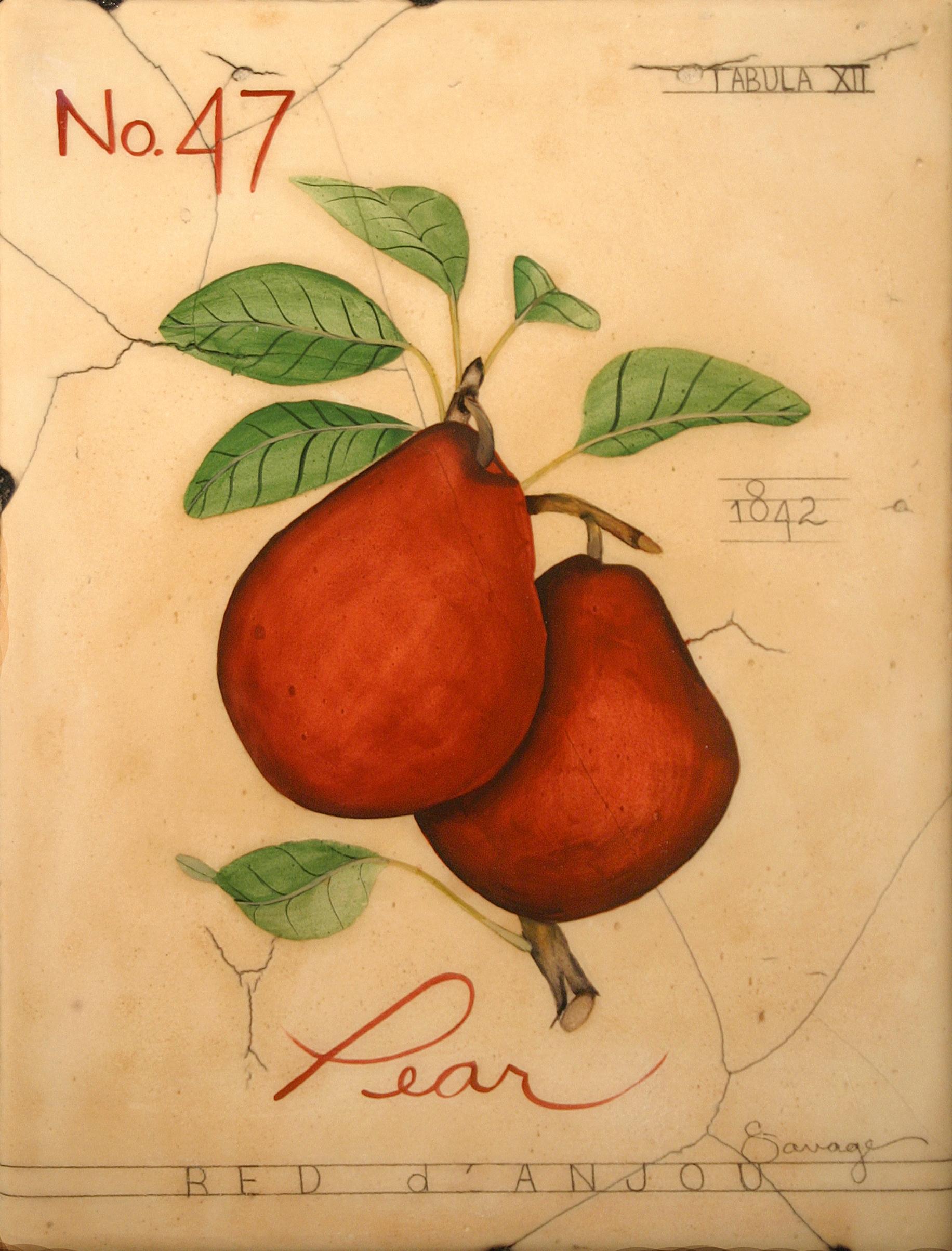 No. 47 Pear