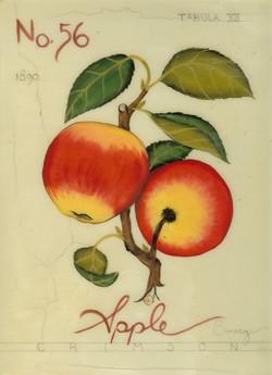 No. 56 Crimson Apple