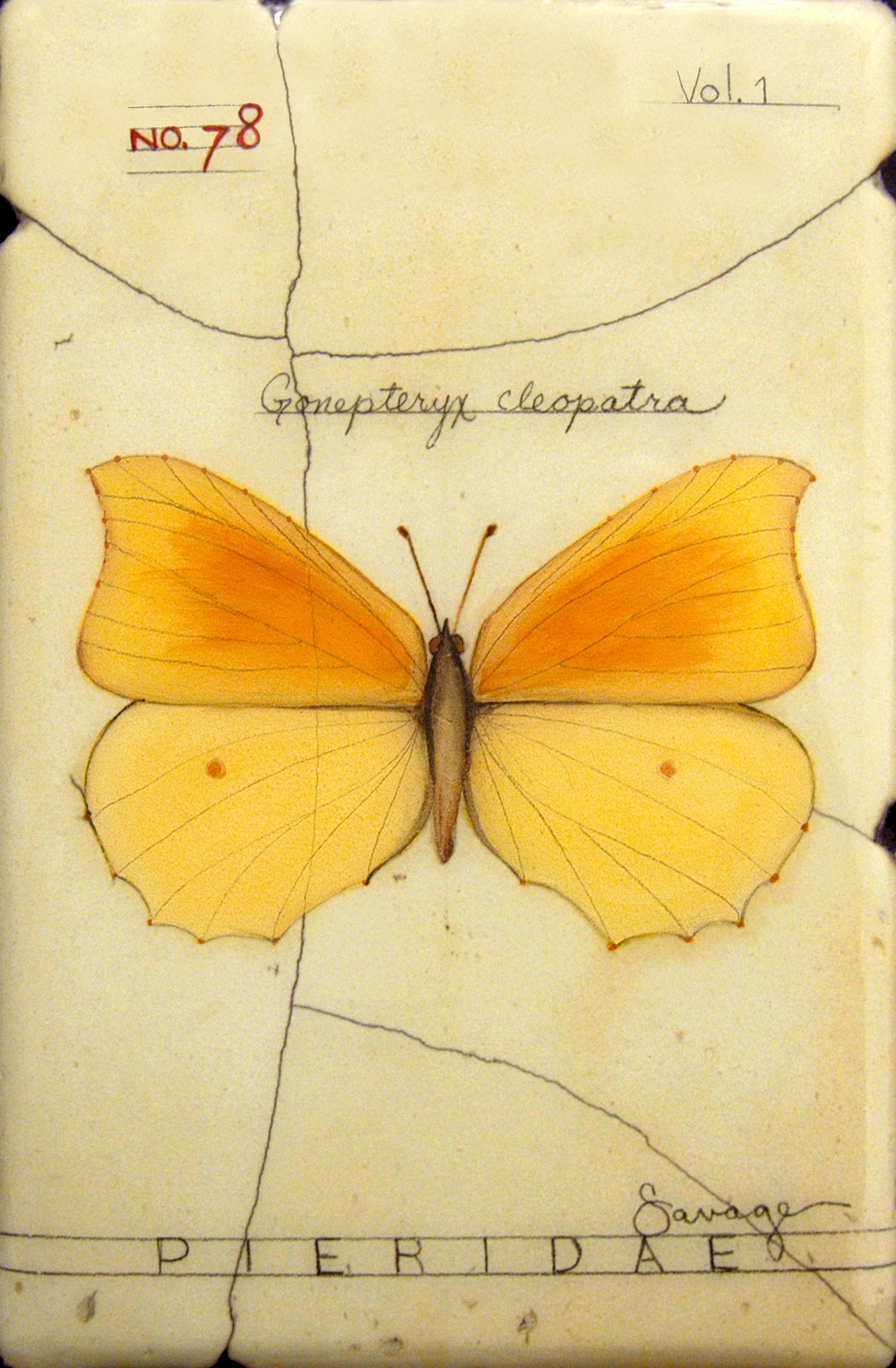 No. 78 Cleopatra Butterfly