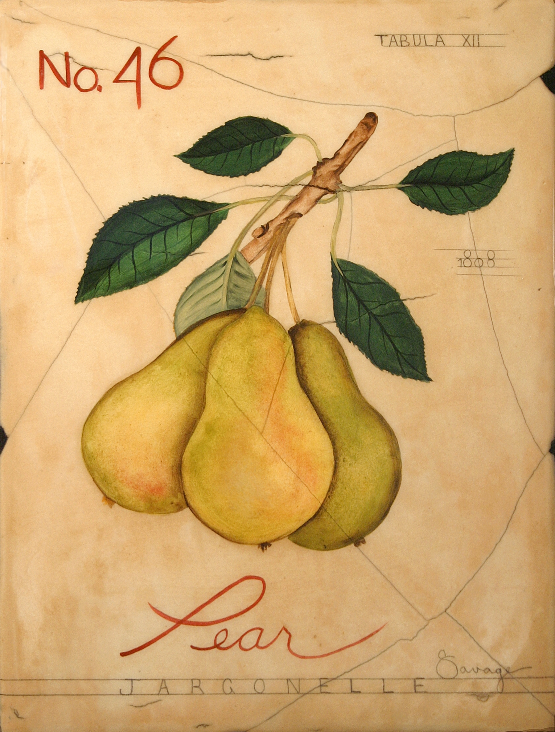 No. 46 Pear