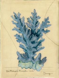 Blue Madrapore Coral