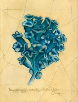Blue Fleur (Trumpet) Coral