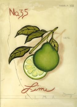 No. 35 Lime