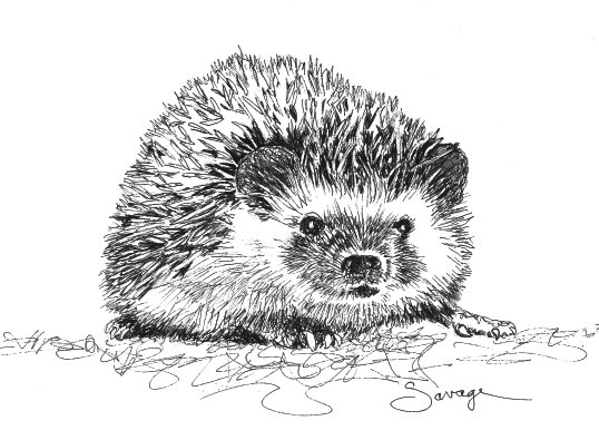 Stella, Hedgehog