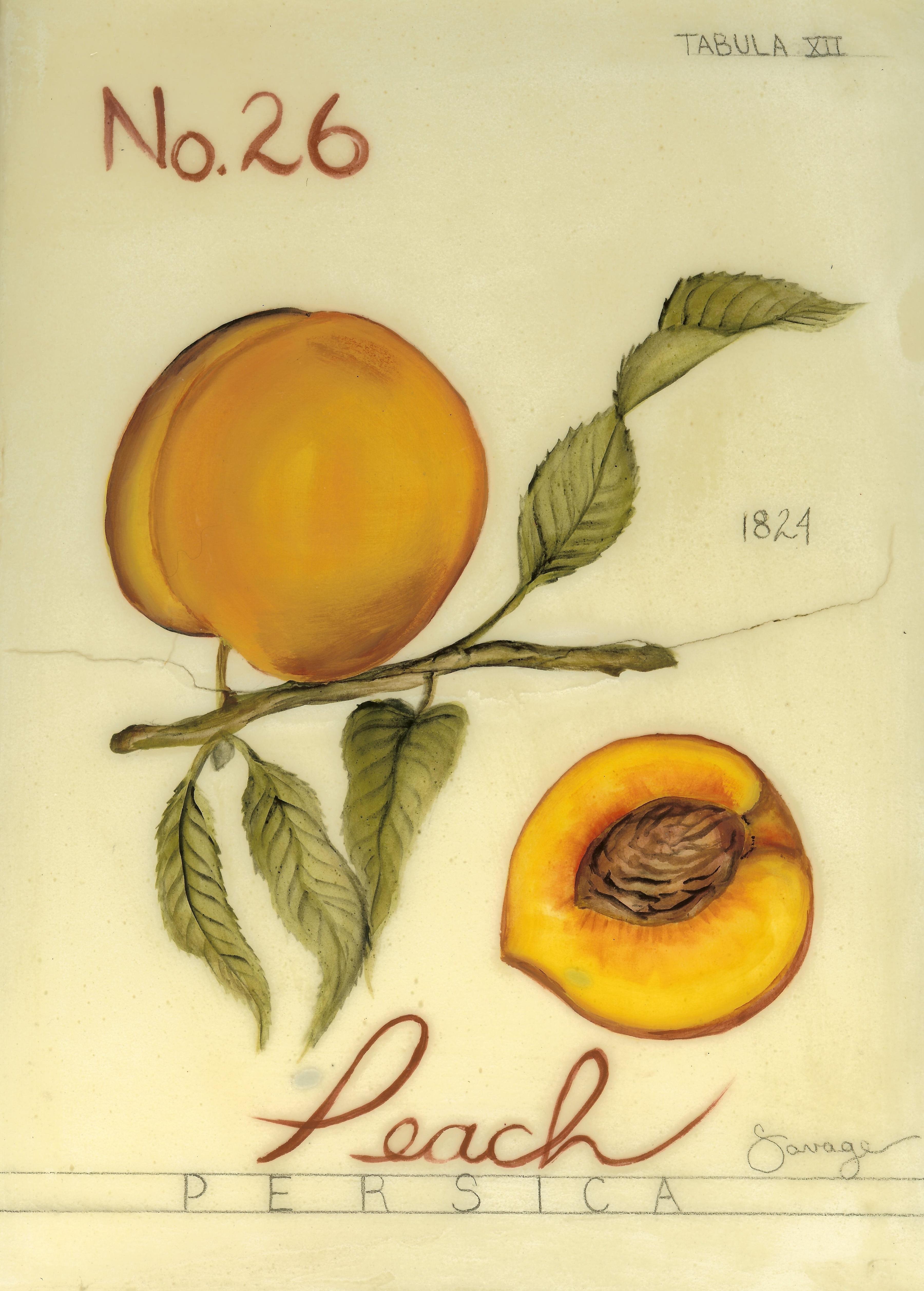 No. 26 Peach