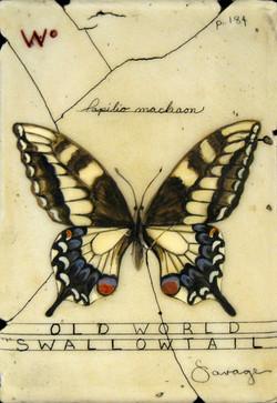 W. Old World Swallowtail Butterfly