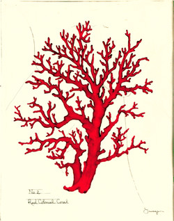 Red Colonial Coral