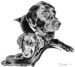 Rocket & Rosie, Labrador Retrievers