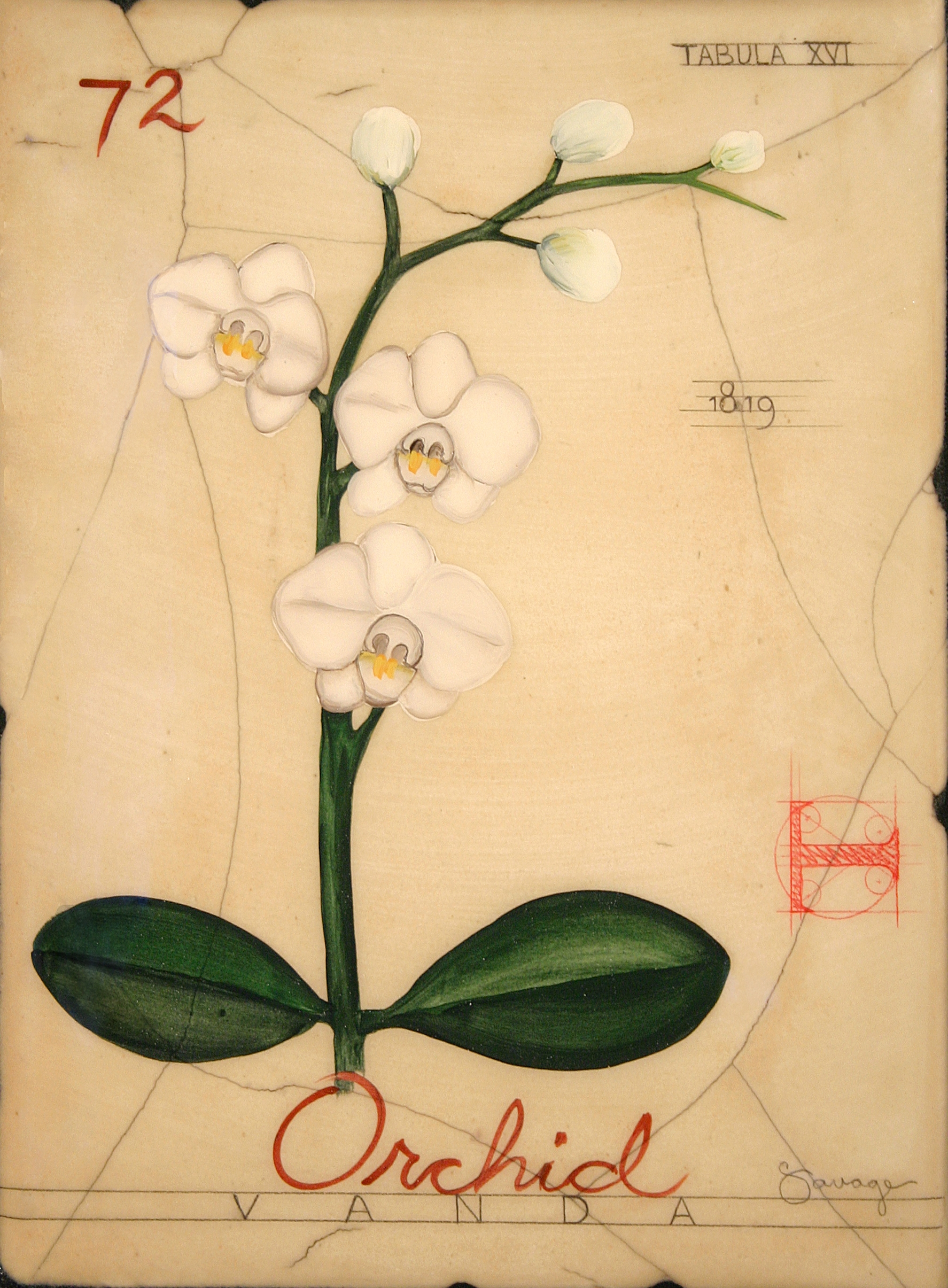 No. 72 Orchid