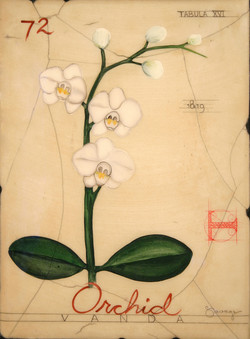 No. 72 Orchid