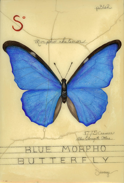 Blue Morpho Butterfly Fresco