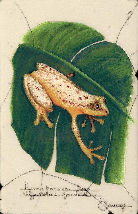 Pygmy Banana Frog Fresco