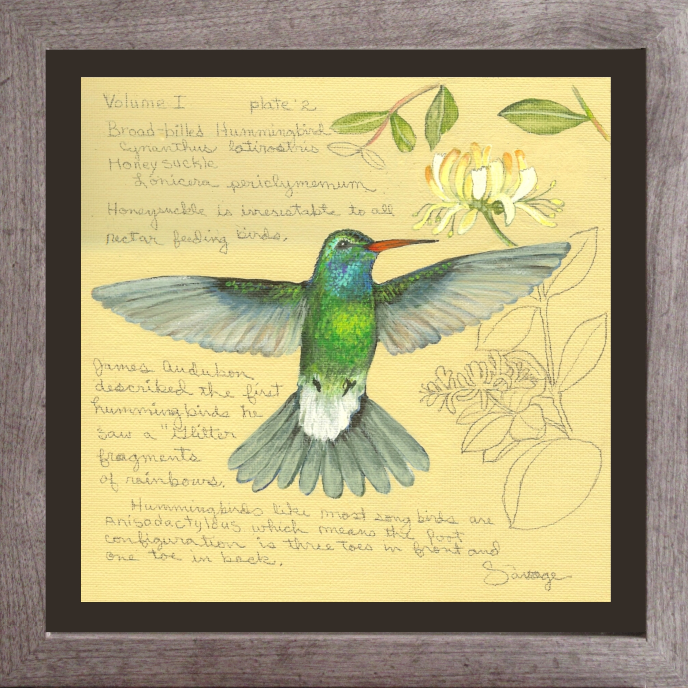 Broad-billed Hummingbird & Honeysuckle