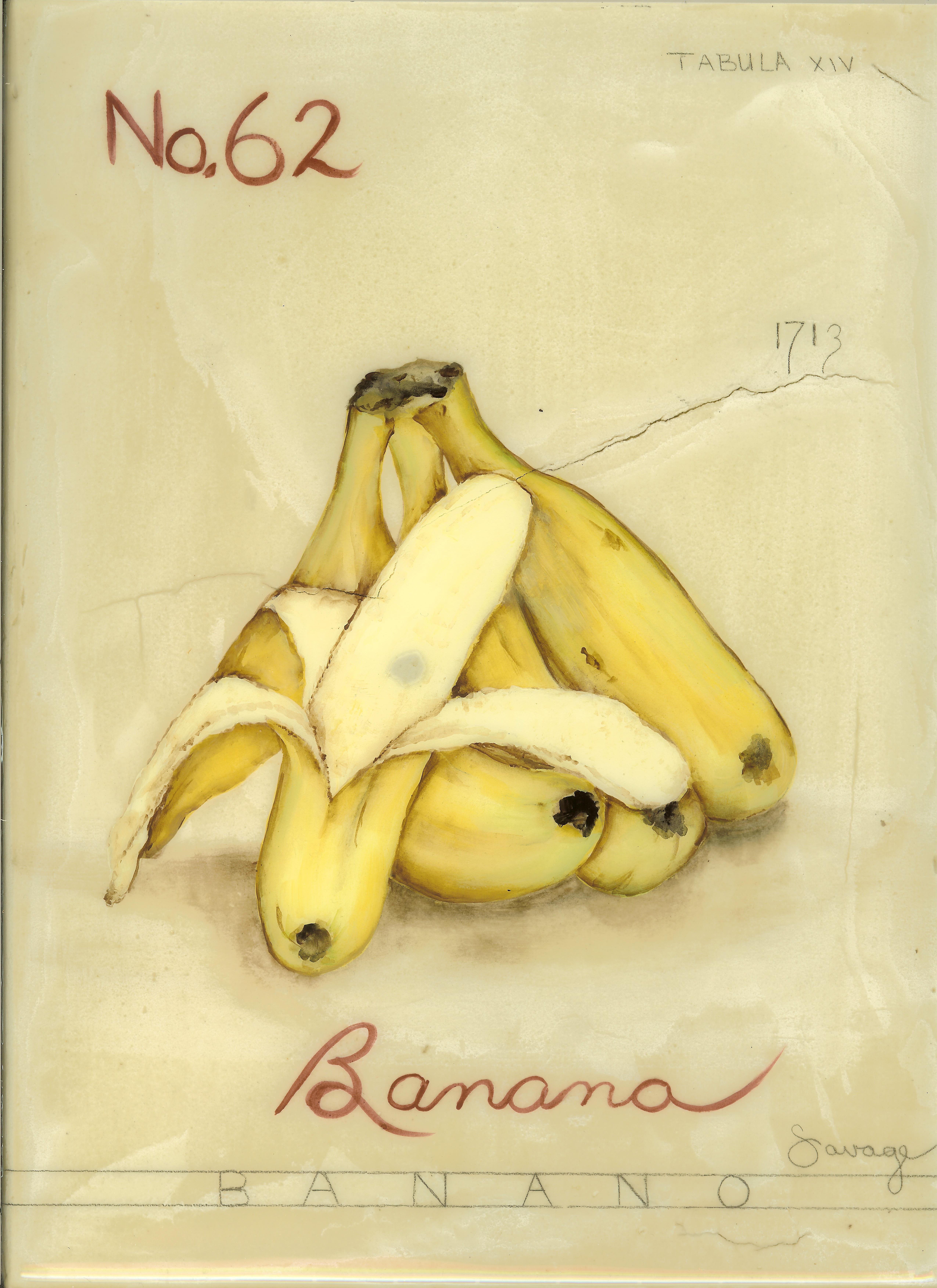No. 62 Banana