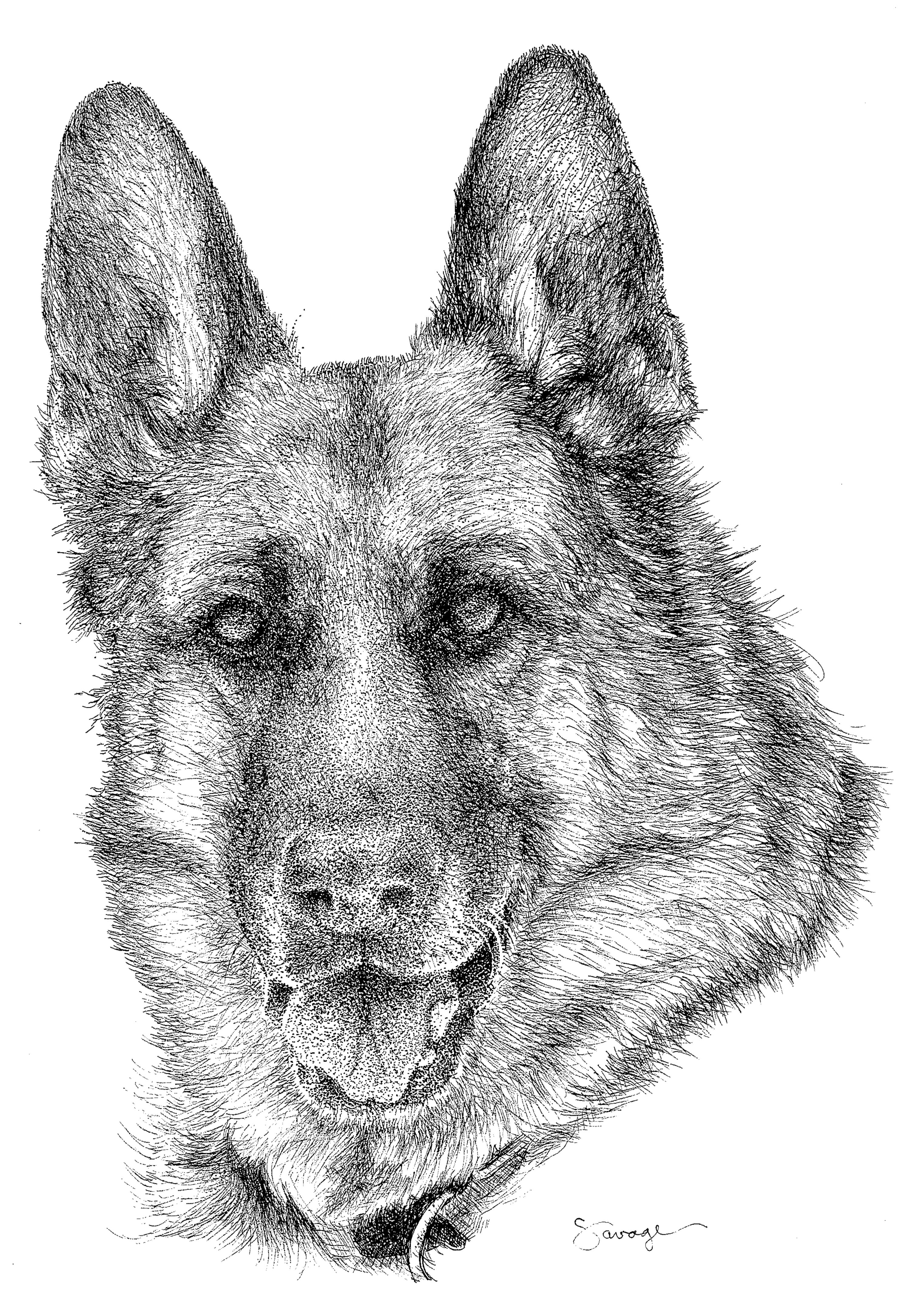 Mr Blue, German Shepherd