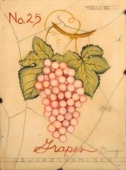 No. 25 Pink Grapes