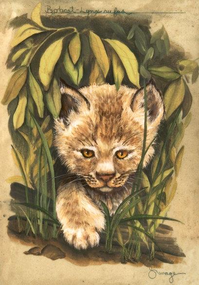 Bobcat Fresco