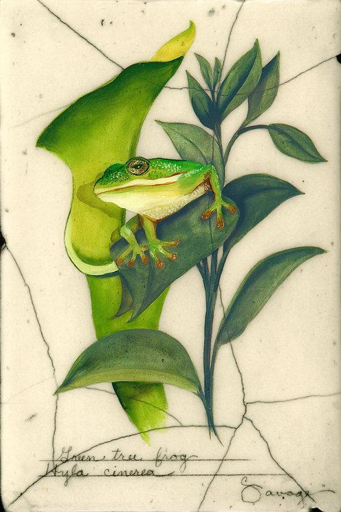 Green Tree Frog Fresco