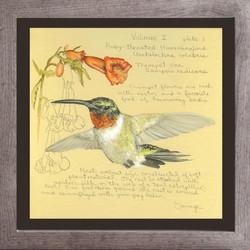 Ruby-throated Hummingbird & Trumpet Vine
