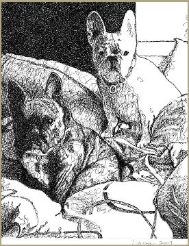 Iggy & Yoda, French Bulldogs