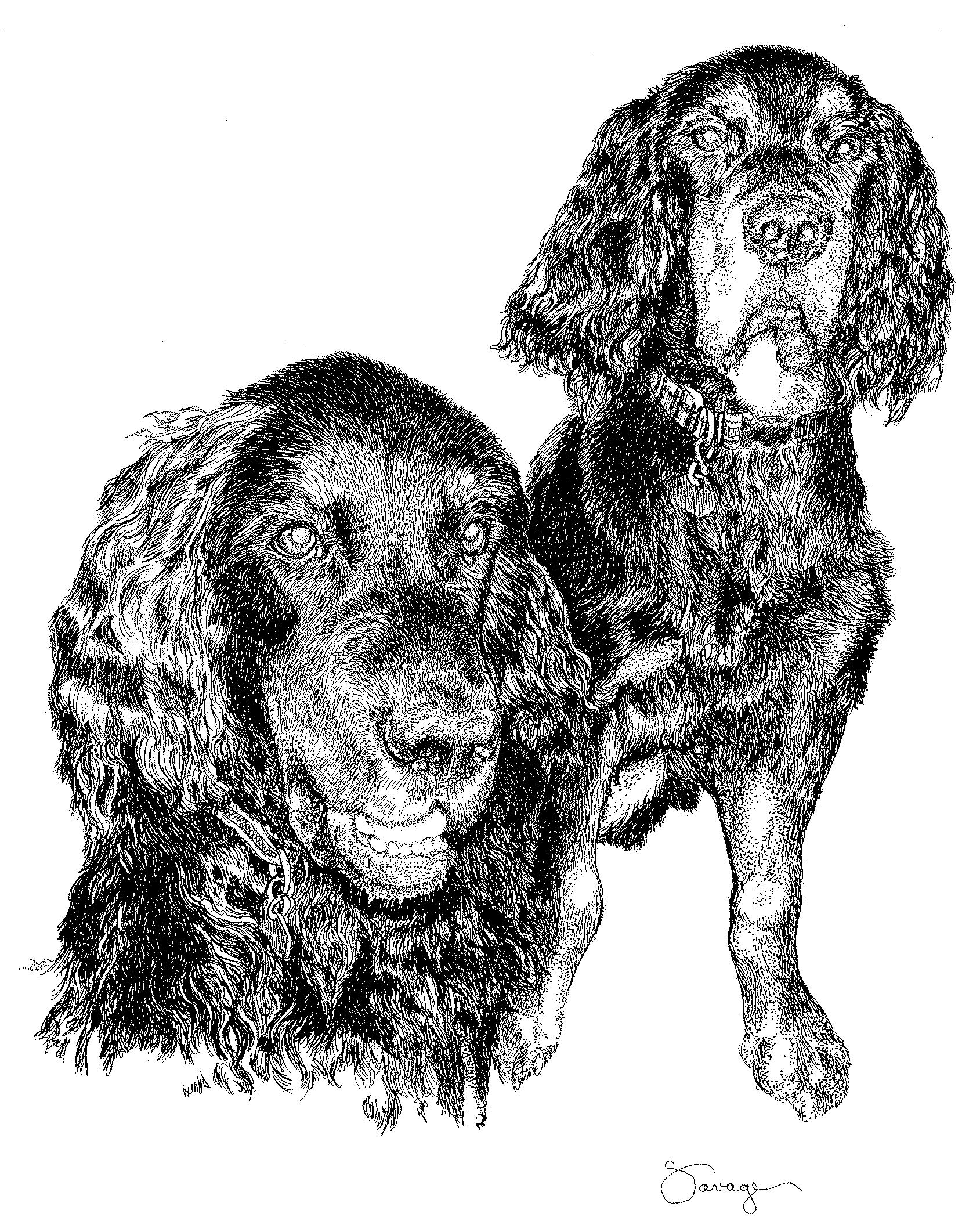 Will & Harry, Gordon Setters