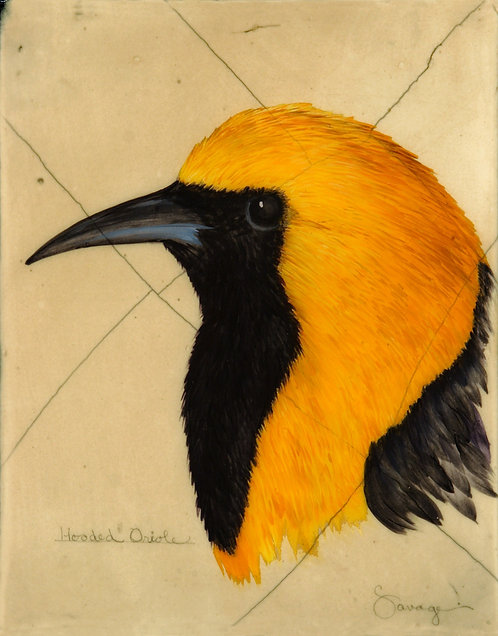 Hooded Oriole Fresco
