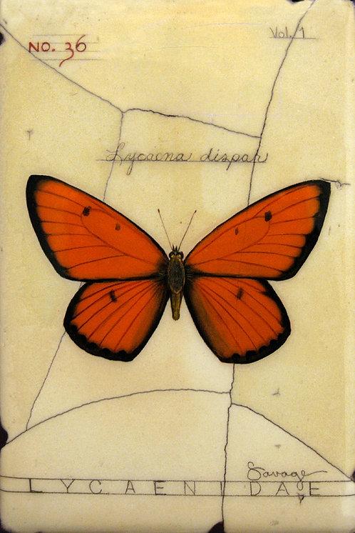 Large Copper Butterfly Fresco