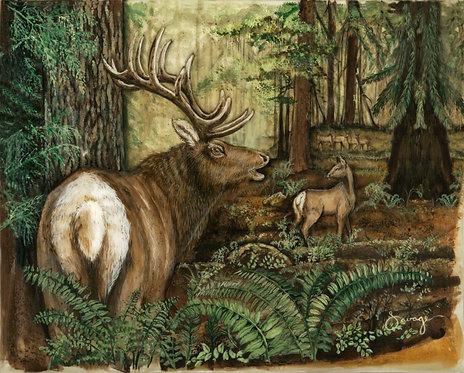 Elk Fresco