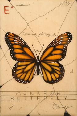 E. Monarch Butterfly