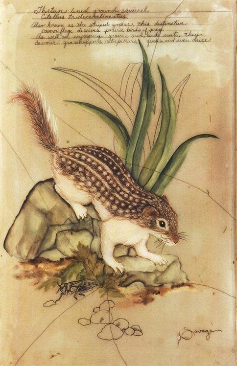 Ground Squirrel Fresco