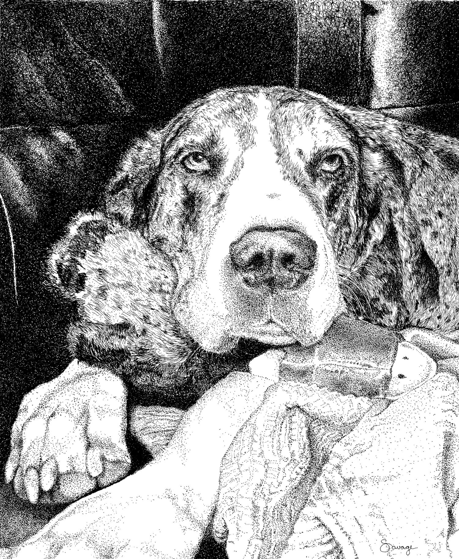 Peppermint Patty, Great Dane