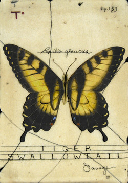 T. Tiger Swallowtail Butterfly