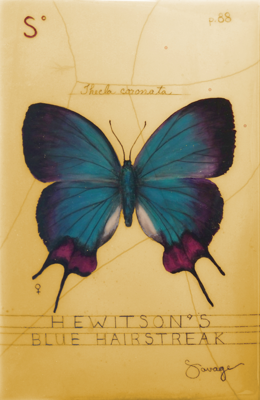 S. Blue Hairstreak Butterfly