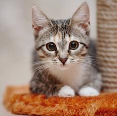 『猫の飼い主が得る7つの科学的に証明された健康上の利点』