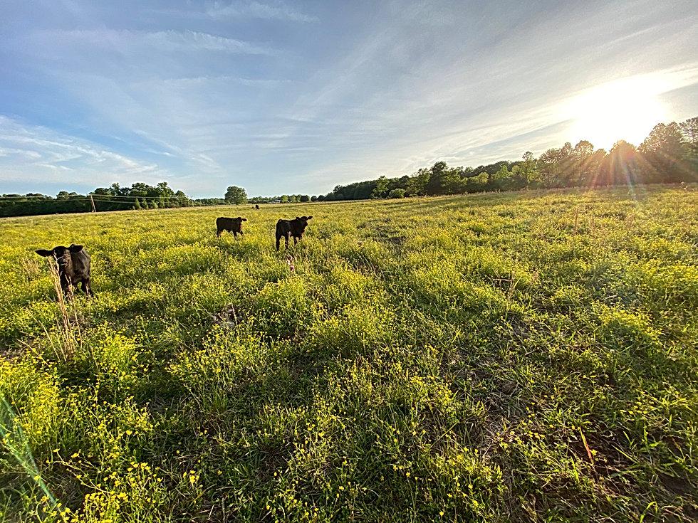 Farm Website 1.jpeg